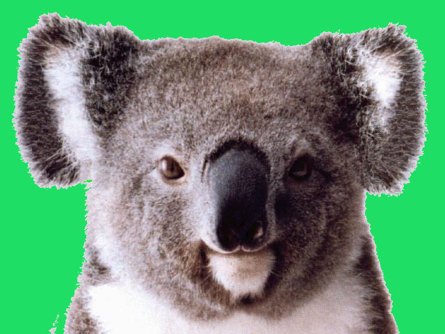 Happy Koalas time!